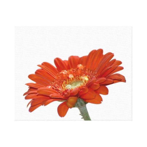Orange Daisy Gerbera Flower Gallery Wrap Canvas
