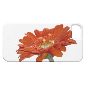 Orange Daisy Gerbera Flower iPhone SE/5/5s Case