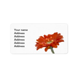 Orange Daisy Gerbera Flower