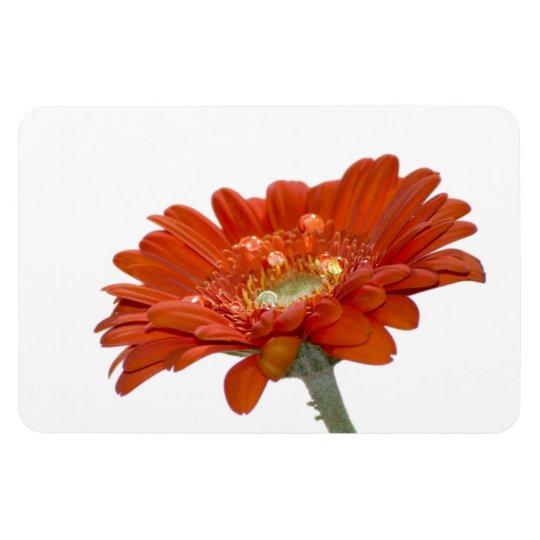 Orange Daisy Gerbera Flower Magnet