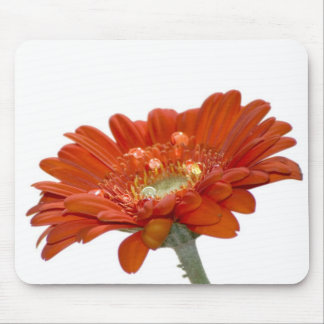 Orange Daisy Gerbera Flower Mouse Pad