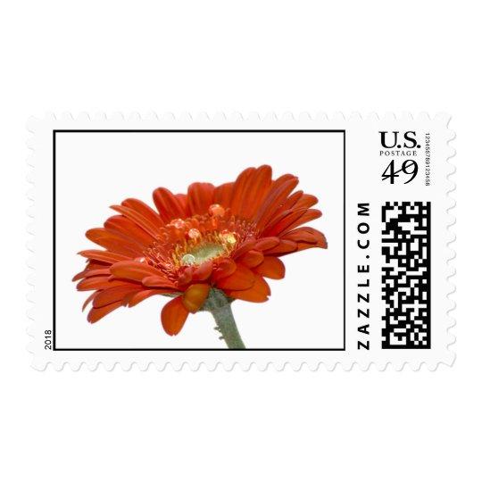 Orange Daisy Gerbera Flower Postage