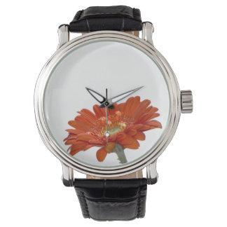 Orange Daisy Gerbera Flower Watch