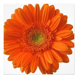 Orange Daisy Invitations