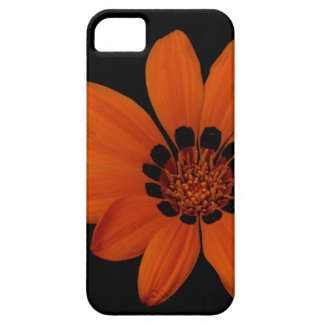 """Orange Daisy"" iPhone 5 Cases"