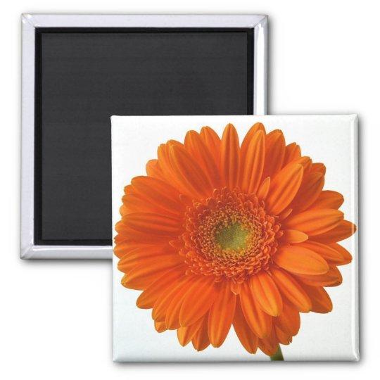 Orange Daisy Magnet