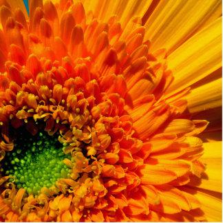 Orange Daisy Photo Sculpture