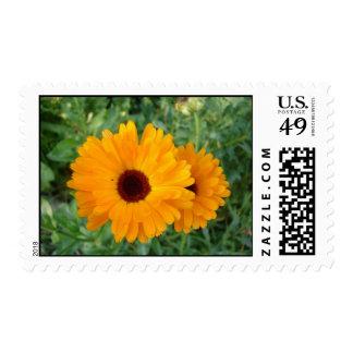 Orange Daisy Postage Stamp