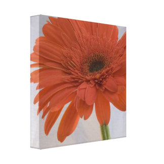 Orange Daisy Wrapped Canvas Print