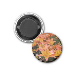 Orange Day Lilies Magnet