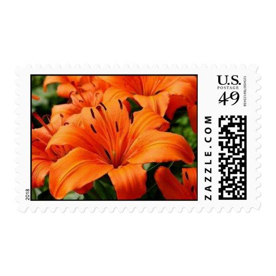 Orange Day Lillies Postage