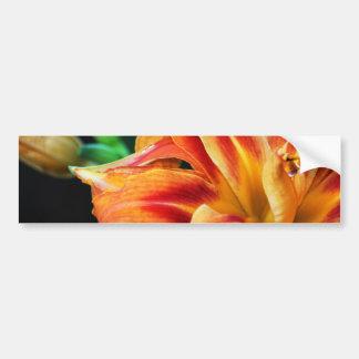 Orange Day Lily Car Bumper Sticker
