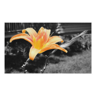 Orange Day Lily Picture Poster