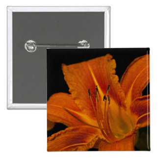 Orange Day Lily Pinback Buttons