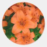 Orange daylilies round stickers