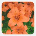 Orange daylilies sticker