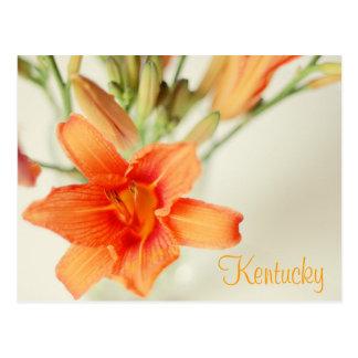 Orange Daylily by JerseyFawn Postcard