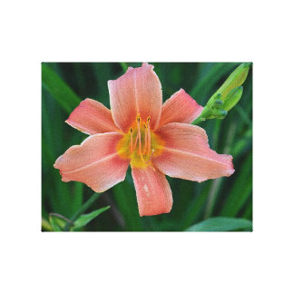 Orange Daylily Canvas Gallery Wrapped Canvas
