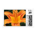 Orange Daylily Daze Postage Stamps