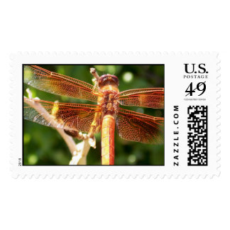 Orange Dazzle Dragonfly Postage Stamp