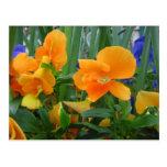 Orange Delight Postcards