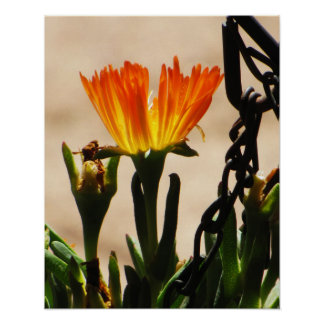 Orange Desert Flower Poster