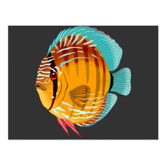 Orange Discus Postcard