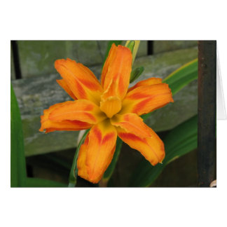 Orange Double Day Lily Card