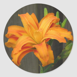 Orange Double Day Lily Classic Round Sticker