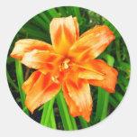 Orange Double Day Lily Sticker