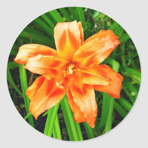 Orange Double Day Lily Stickers