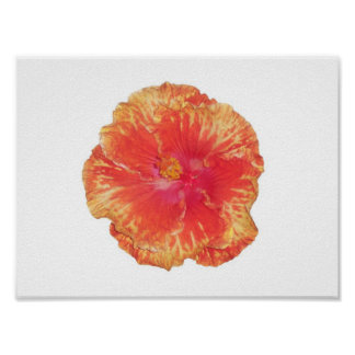 Orange Double Hibiscus Poster