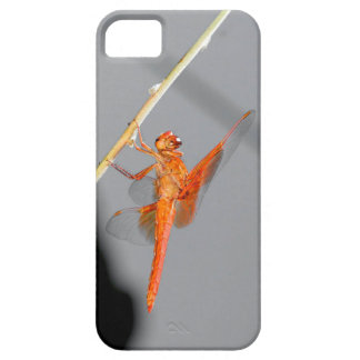 Orange Dragonfly iPhone 5 Cover