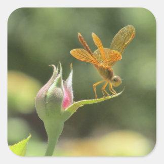 Orange Dragonfly on Pink Rosebud Square Sticker