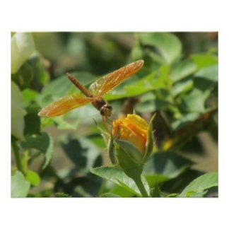 Orange Dragonfly on Yellow Rosebud Poster