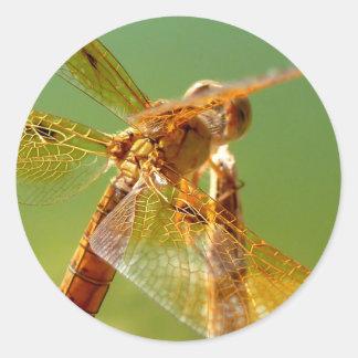 Orange Dragonfly Sticker