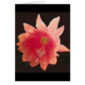 Orange Epiphyte Note Card