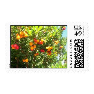 orange essence postage