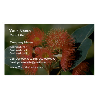 Orange Eucalyptus ficifolia flowers Double-Sided Standard Business Cards (Pack Of 100)