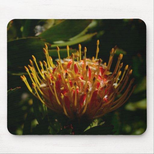 ORANGE EXOTIC CACTUS FLOWER MOUSE PAD
