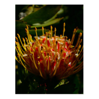 ORANGE EXOTIC CACTUS FLOWER POSTCARD