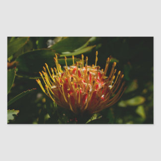 ORANGE EXOTIC CACTUS FLOWER RECTANGULAR STICKER