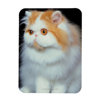 Orange Eyed and Cute Cat Magnet