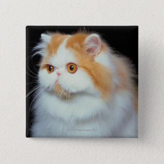 Orange Eyed and Cute Cat Pinback Button