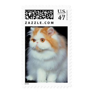 Orange Eyed and Cute Cat Stamp