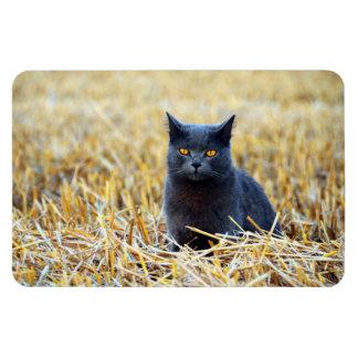 Orange-Eyed Black Cat in Field Magnet