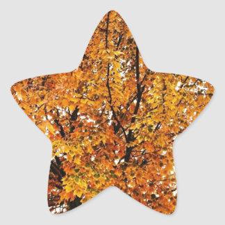Orange Fall Autumn Leaves Photograph Star Sticker
