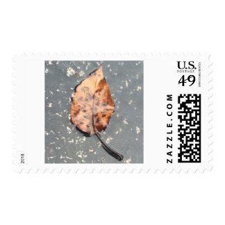 Orange fall leaf postage stamp