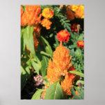 Orange Feather Plant Print