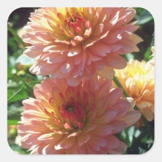 Orange Ferncliff Daybreak Dahlia flowers Stickers